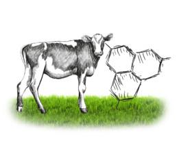 caglio vitello materie prime | Caglificio Clerici