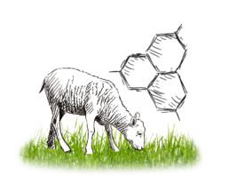 caglio agnello materie prime | Caglificio Clerici