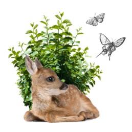 attenzione a biodiversità | Caglificio Clerici